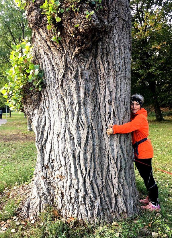 Herbst - Baum